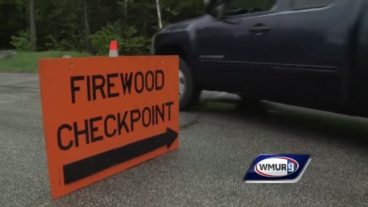 Forest rangers to inspect firewood at checkpoints in NH this weekend
