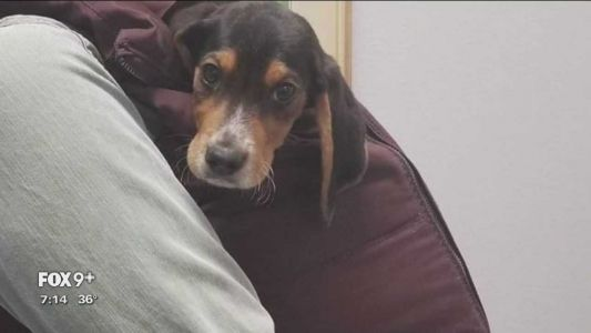 Lost Wisconsin puppy wins the heart of the internet