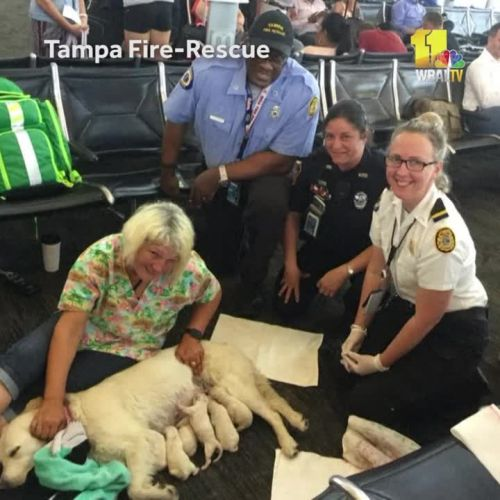 Service dog gives birth in airport