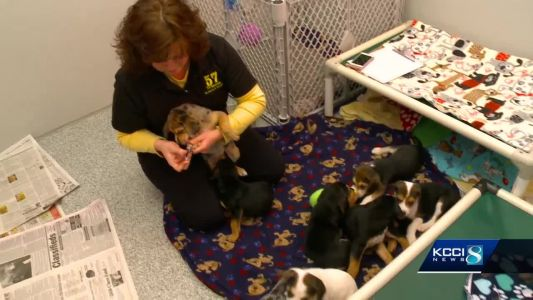 Puppies thrown in icy water heats up animal cruelty fight