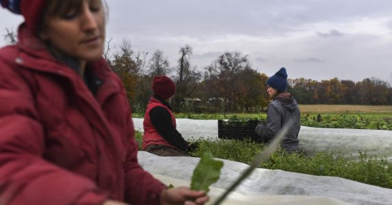 A growing number of young Americans are leaving their desk jobs to farm