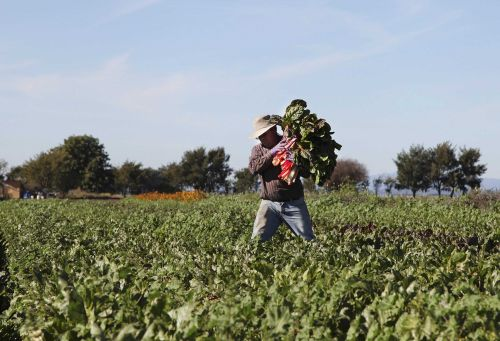 The industry that feeds the nation now in limbo, Salinas Valley produce faces uncertainty