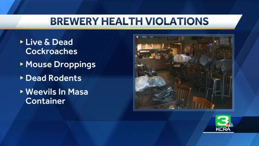 Oak Park Brewing Company reopens after roaches, mice found