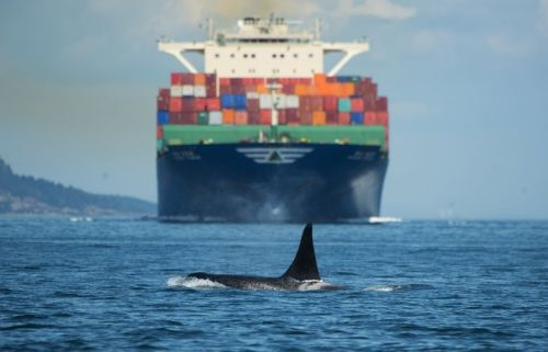Hostile Waters: How our noise is hurting orcas' search for salmon