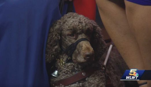 Charity Dog Walk raises funds to train, provide service dogs