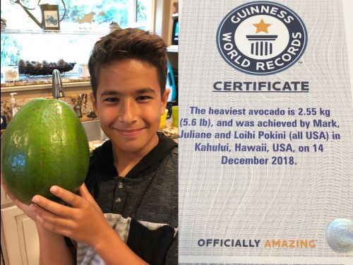 The heaviest avocado in the world weighs over 5 pounds and is nearly the size of a small child's head