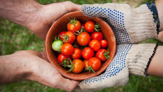12 gardening essentials for green thumbs