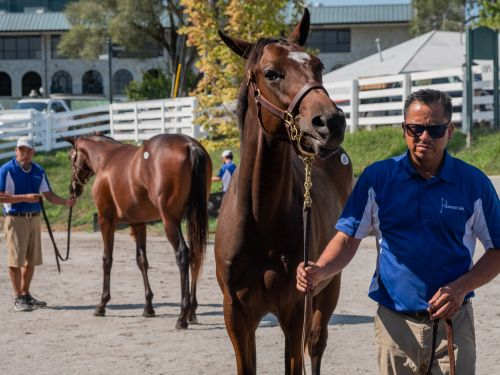 What it's like going to the 'Super Bowl of horse sales,' where royals and millionaires bid on horses they hope might be the next Kentucky Derby winner