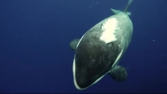 Animal Stories with Dan Green: a whale picture