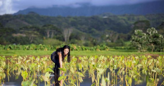 Shortage expected after floods smother Hawaii staple crop