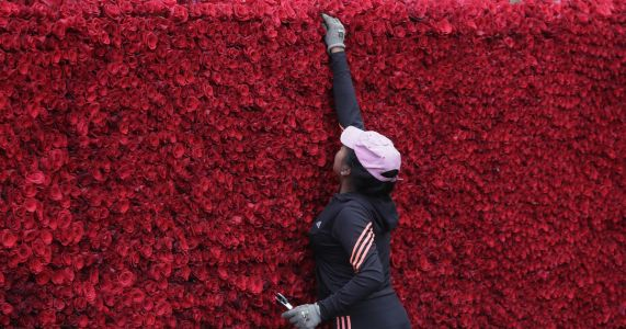 Ecuadorean townspeople build record pyramid of roses