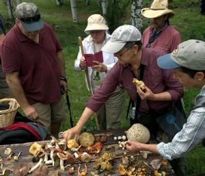 Arizona Mushroom Society promotes interest in state's wild fungi