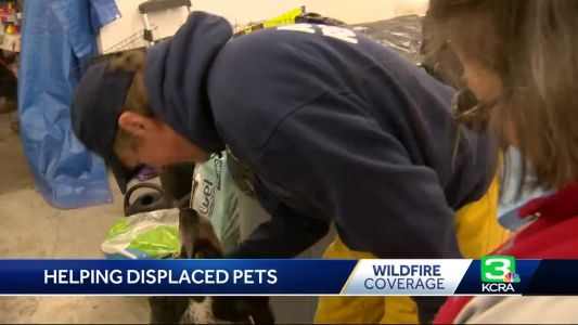 Found: 2,000 displaced pets get temporary home