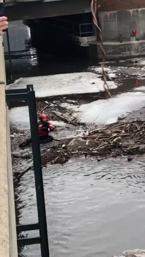 Dog rescued from ice on Milwaukee River