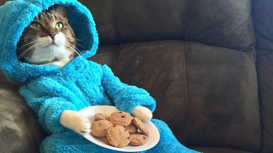 US embassy accidentally sends email 'meeting' invite featuring photo of cat in pajamas