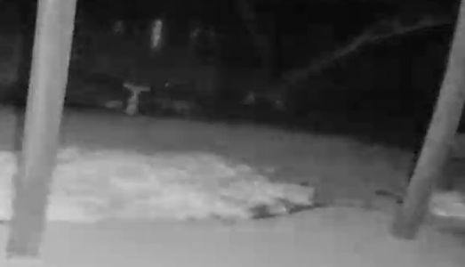Waukesha couple believes they heard sound of cougar on surveillance video