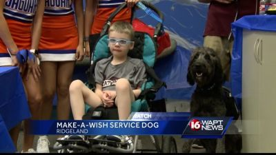 Make-A-Wish helps 5-year-old get service dog