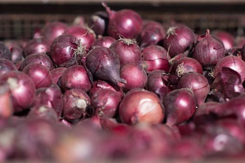Red onions linked to salmonella outbreak that has sickened people in 31 states, officials say