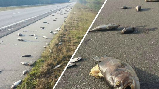Fire department washes stranded fish off interstate in North Carolina