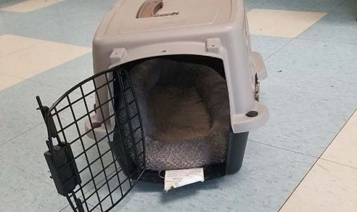 Dog's crate becomes its coffin after being abandoned in heat outside shelter