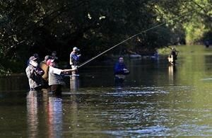 Puyallup River is open for hatchery coho fishing after hatchery meets escapement goal