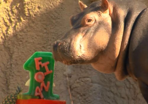 Watch: Fiona celebrates first birthday with her very own cake
