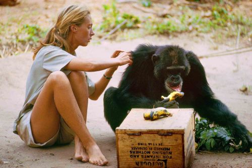 How to make friends with chimps, according to Jane Goodall
