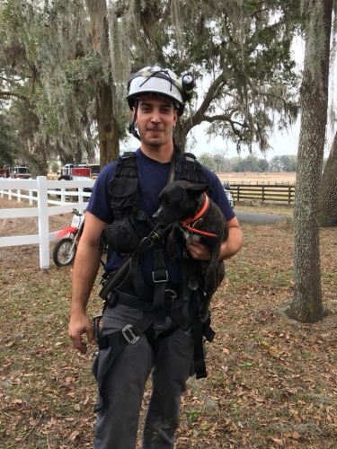 Dora the dog rescued by Marion County crews after falling in hole