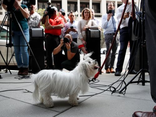 Roger Stone allegedly threatened to kidnap a witness's therapy dog