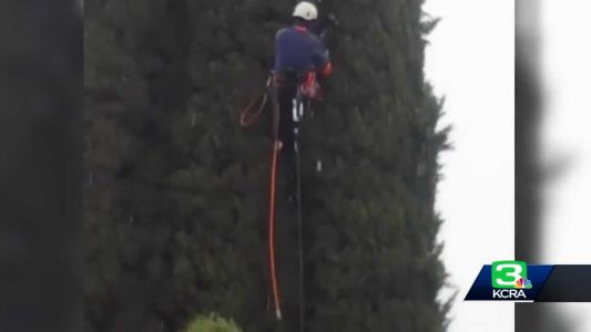 Modesto duo rescues cat from 60-foot tree in the rain