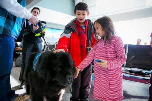 Delta just banned 'emotional support animals' on long flights - and science is on their side
