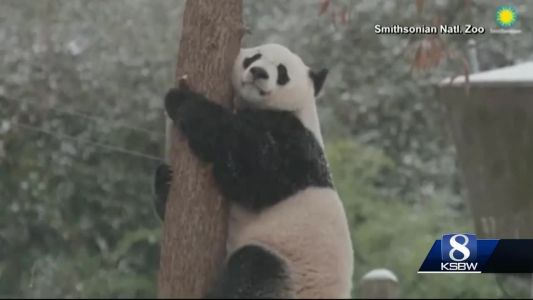 Animal Stories with Dan Green: Bei Bei in the snow