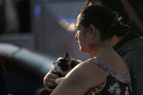 Cat rescued from northwest OKC apartment fire