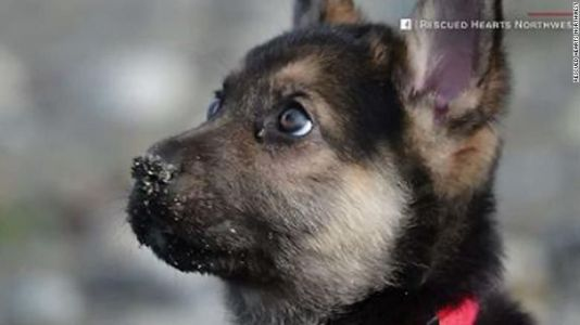 Rescue starts bucket list for dying puppy