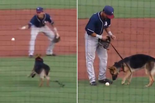 Dog Races On Field To Retrieve Ball At Minor League Baseball Game
