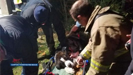 Firefighters rescue Saint Bernard that fell down embankment
