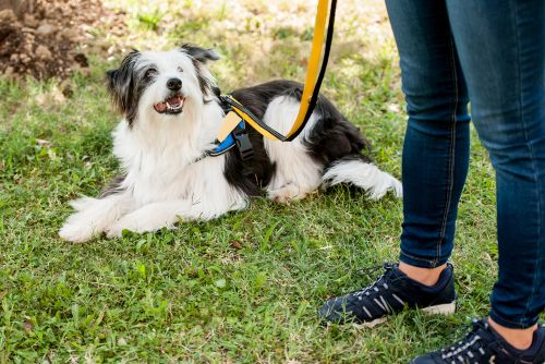 More college students 'enrolling' emotional support animals