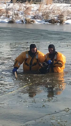 Firefighters save dog that fell through thin ice in Upper Marlboro