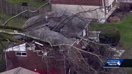 Large tree falls on house in Plum