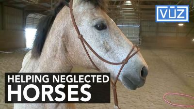 Group helps rescued horse make remarkable recovery