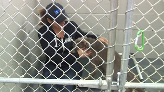 2 women spend weekend living inside animal shelter to raise money for furry friends