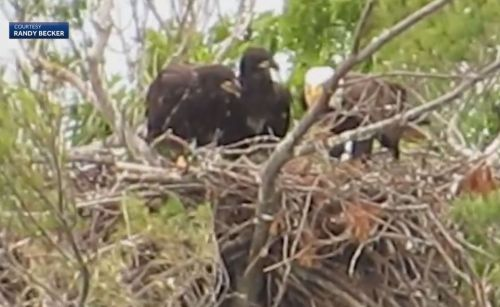 Bald eagle family spotted by Massachusetts lake