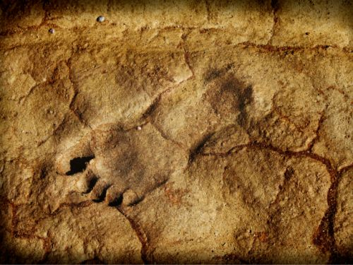 When did our ancestors begin to walk the way we do? Some 3.6 million-year-old footprints hold clues