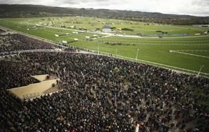 Cheltenham defends decision to proceed with horse race event