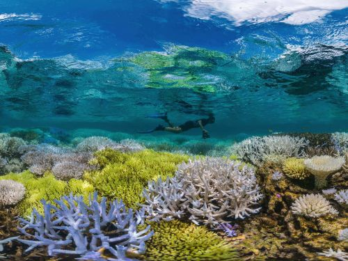 Half of the Great Barrier Reef has died since 2016 - here's what happens if all coral reefs on Earth die off