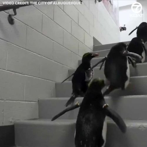 The long-awaited penguins have landed