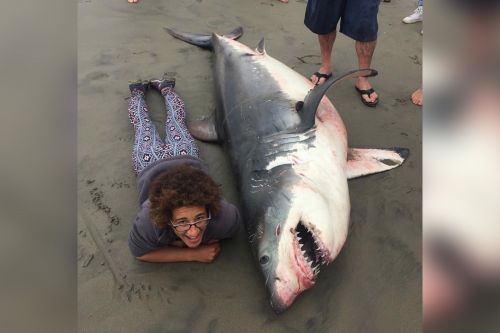Biologist insists controversial dead shark pic was done for science