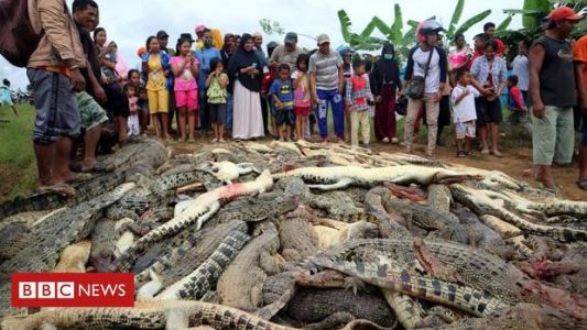 Indonesia mob kills nearly 300 crocodiles