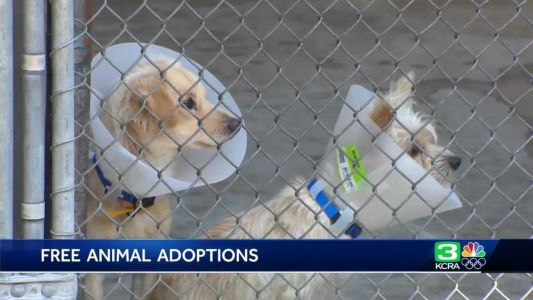 Front Street animal shelter offers free adoptions this weekend
