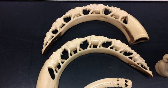 Federal officials seize $25,000 of carved ivory at Sea-Tac Airport